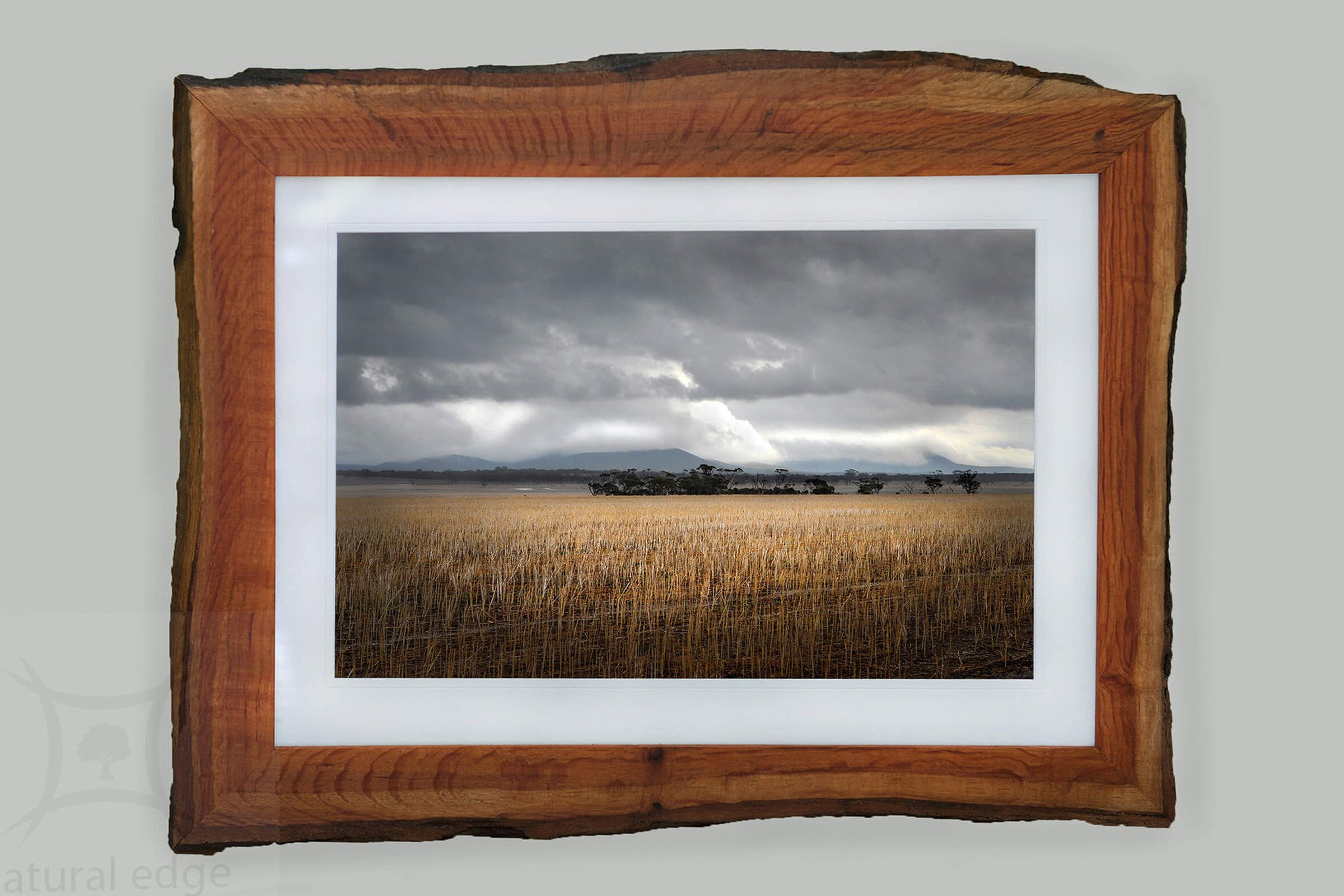 A harvested field of canola with the Stirling Ranges in the background with a dramatic sky framed in WA Sheoak bark edge timber made by Natural Edge Framing and Photography.