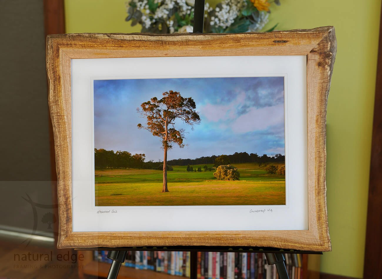 Photo-of-a-mature-marri-tree-standing-alone-in-a-paddock-framed-in-bark-edge-marri-red-gum-timber