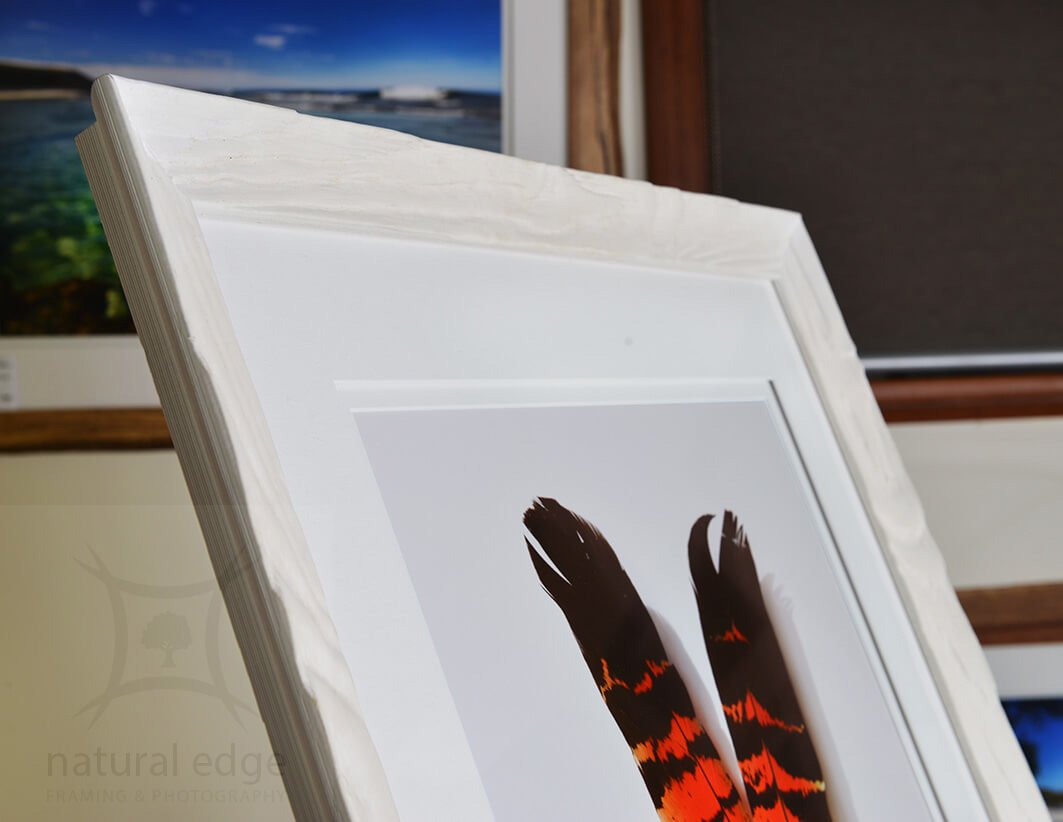 Top-left-corner-photo-of-two-forest-red-tail-Cockatoo-feathers-on-a-white-background-framed-in-a-white-frame-by-natural-edge-framing-and-photography-for-the-marketplace.